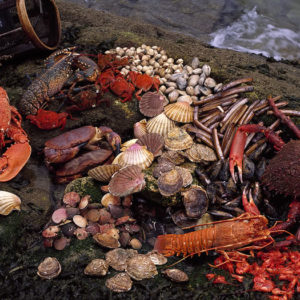 Clase de Cocina sobre Pescados y Mariscos 7 Noviembre